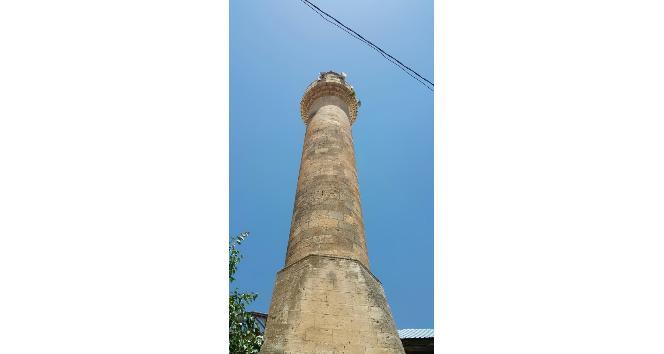 Minarenin şerefesinde bitki yetişti