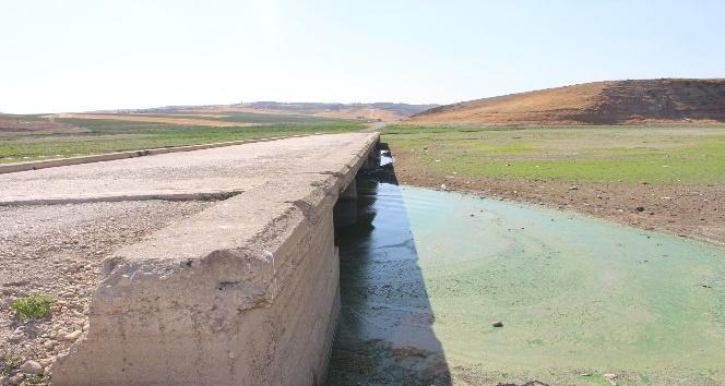 Kuruyan barajdaki eski köprü ortaya çıktı