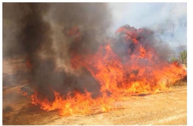 Kahta'da 7 hektarlık alan yandı