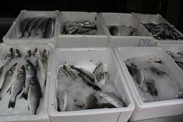 Balıkçılık Av Yasağı Başladı