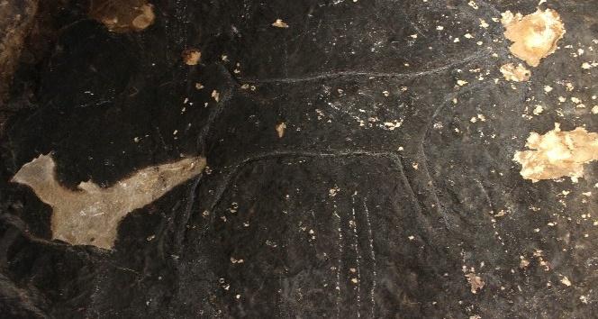 Taş devri insanları tarafından 42 bin yıl önce çizildi