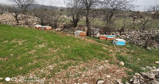 Adıyaman'da arı kovanlarını çalan şahıs tutuklandı