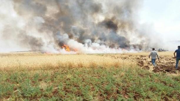 200 Dönümlük Buğday Tarlası Küle Döndü