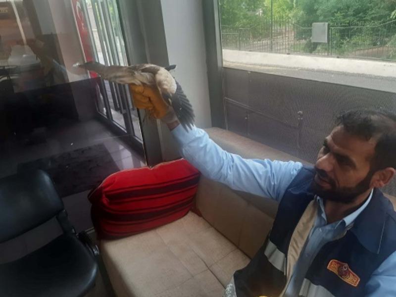 Kahta'da Yaralı Balaban Kuşunu İtfaiye Ekipleri Kurtardı