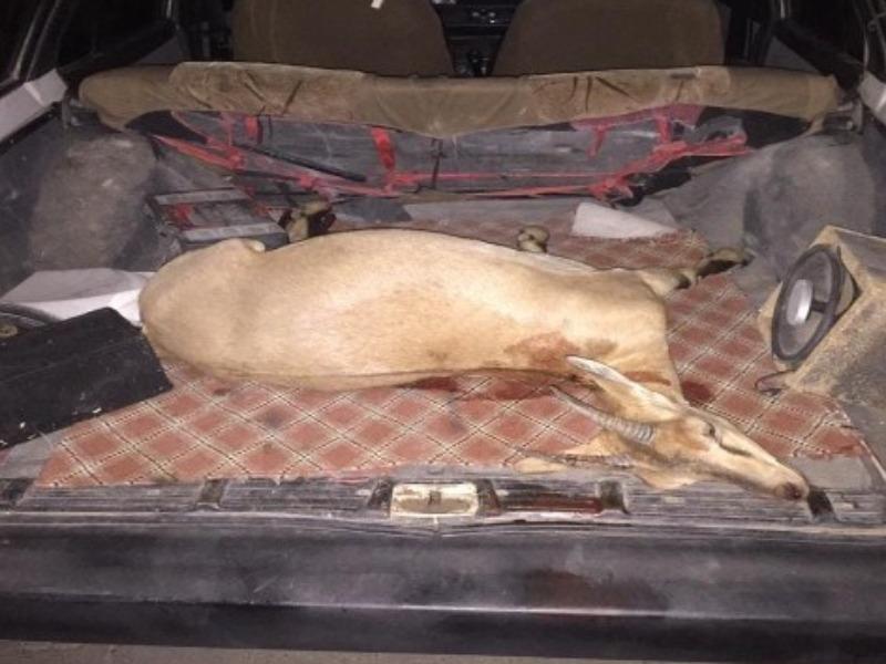 Yaban keçisini avlayan şahıslar yakalandı