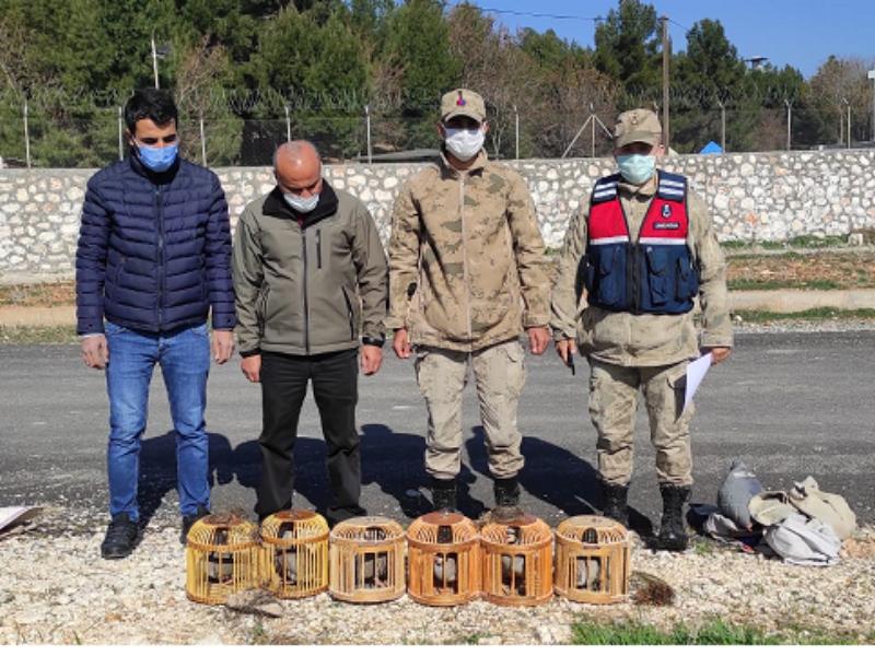 Adıyaman'da tuzakla yakalanan keklikler doğaya salındı